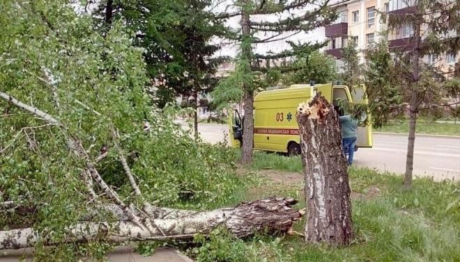 В Альметьевске упавшее дерево придавило детей