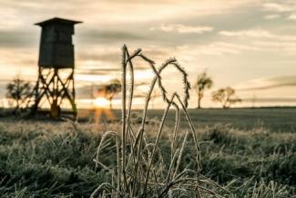 По столице Татарстана «ударят» заморозки