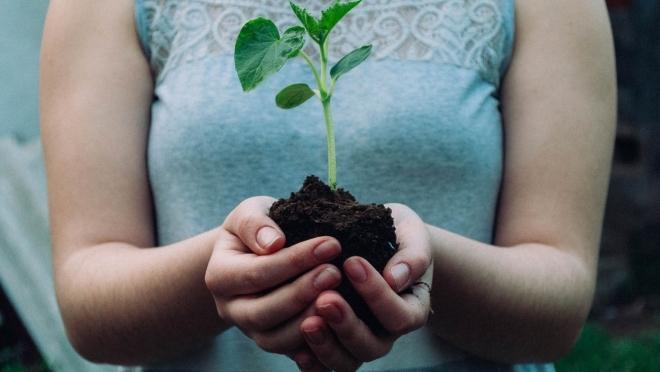 Новости  - Больше восьми тысяч деревьев посадили в Казани