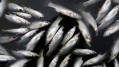 Новости  - На реке Крутайка в Татарстане зарегистрировали массовую смерть рыб