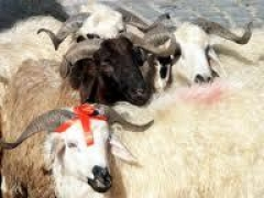 Новости  - Жертвоприношения во время Курбан-байрама пройдут на двух площадках для ритуального забоя