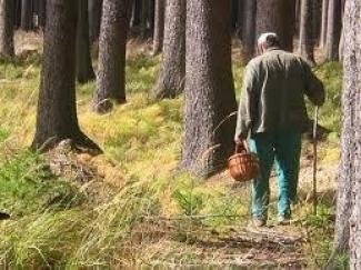 Поиски пропавшего грибника закончены (Татарстан)