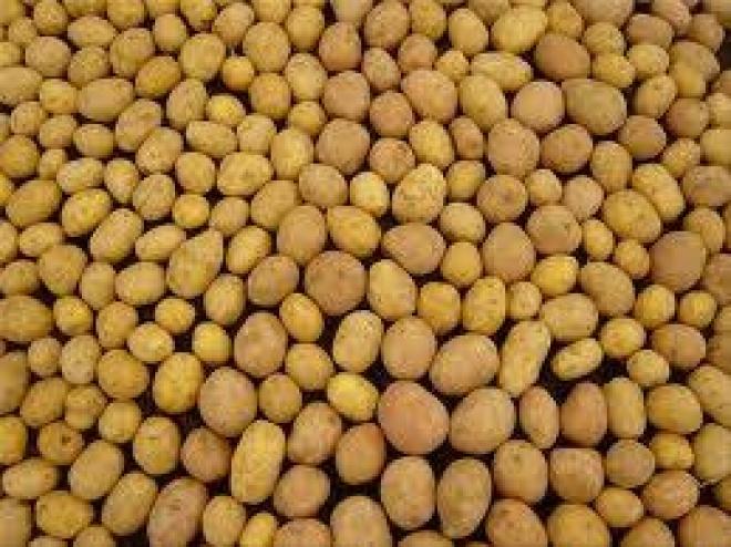 Картошка в этом году значительно подешевеет (Татарстан)
